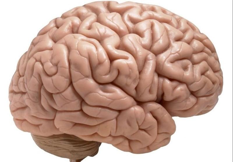 مغز ما محدود و شگفتانگیز